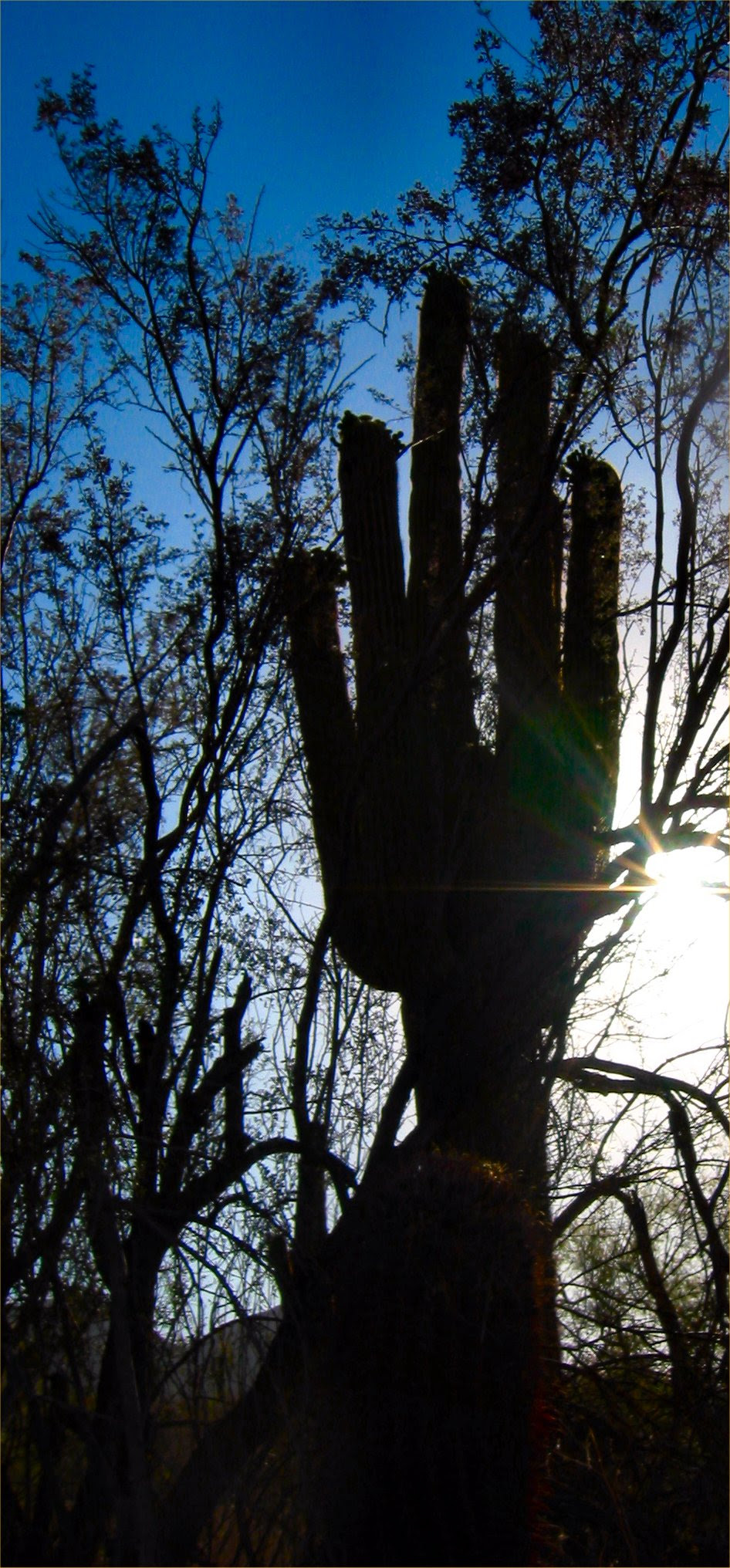 Saguaro Hand in AZ desert at Sunrise backlit by the over exposed sun. Photo - soul-amp.com