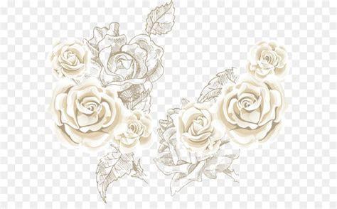 Beach rose Flower Clip art   White roses roses background