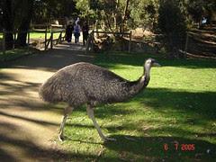Emu di Ballarat Wildlife Park, Australia