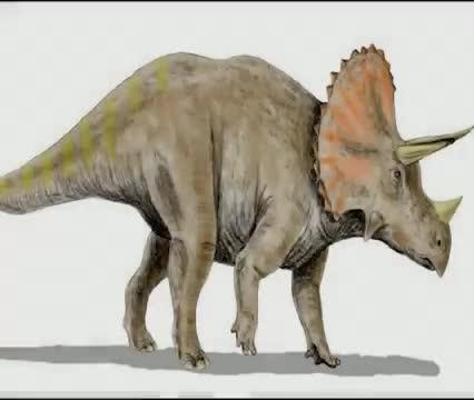 Triceratops gets a cousin: Researchers identify another horned dinosaur species