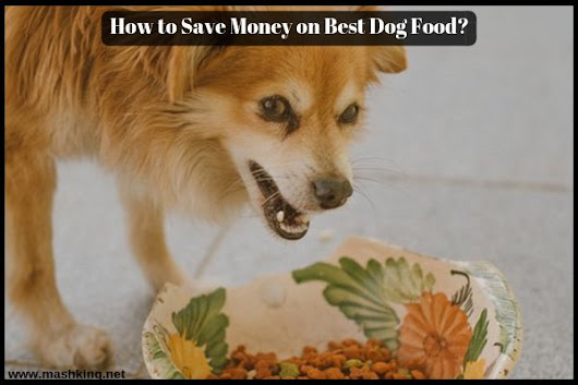 How to Save Money on Best Dog Food ? - Must check (Updated 2018) ✅