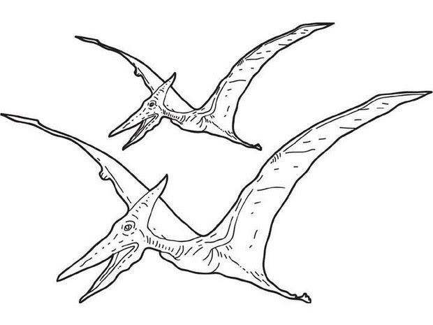 pterosaur zum ausmalen 9qr