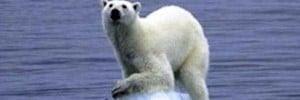 polar_bear_on_ice