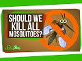What If We Killed All The Mosquitoes In The World?