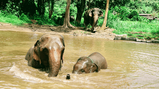 Best Elephant Sanctuary Chiang Mai - Couple Travel The World