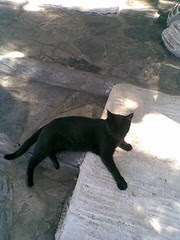 Cat at the site of the mausoleum