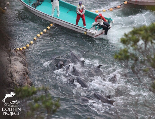 Save Japan Dolphins | Ric O'Barry's Dolphin Project