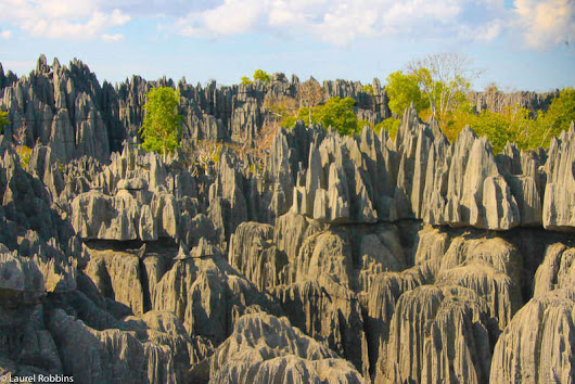 15 Madagascar Facts: How Many Do You Know?