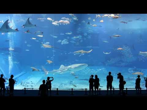Kuroshio Sea - 2nd largest aquarium tank in the world - (Please Don't Go by Barcelona)