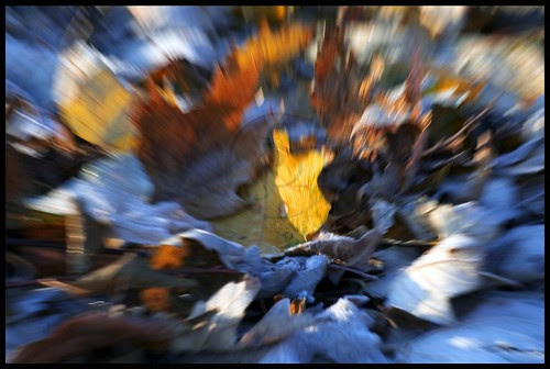 Orillia - Dizzying Frost; spinning autumn leaves