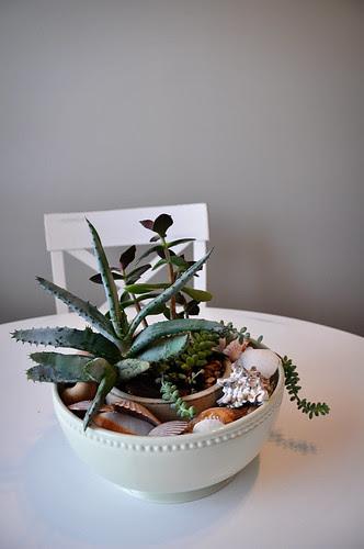 CactusCenterpiece
