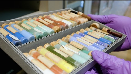 Discover Harvard's Collection of 2,500 Pigments: Preserving the World's Rare, Wonderful Colors