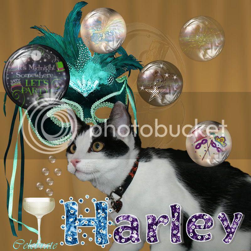 Bi-colored Cat,Happy New Year