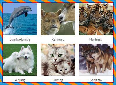 daftar nama  binatang mamalia nama gambar binatang