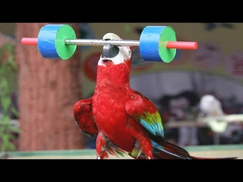 Funny Animals Teamwork Compilation 2018