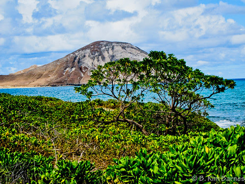 Oahu Shore by kimbar
