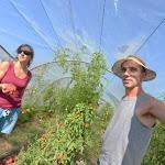 """Agriculture - Ils deviennent maraîchers en Creuse : """"On veut que nos légumes soient accessibles à tous et nourrir les gens à l'échelle locale"""""""