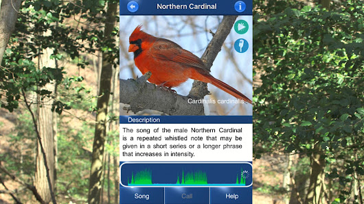 Bird Song - Listen and Record to Identify Birdsong | NewsWatch Review