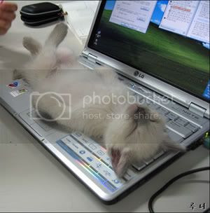 Laptop Coma Cat Pictures, Images and Photos