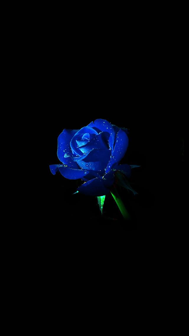 Black And Blue Flower Wallpaper