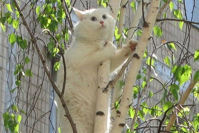Как снять кота с дерева. Действенный способ.