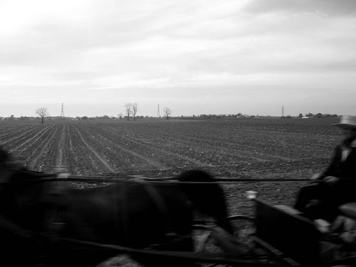 horse and cart field
