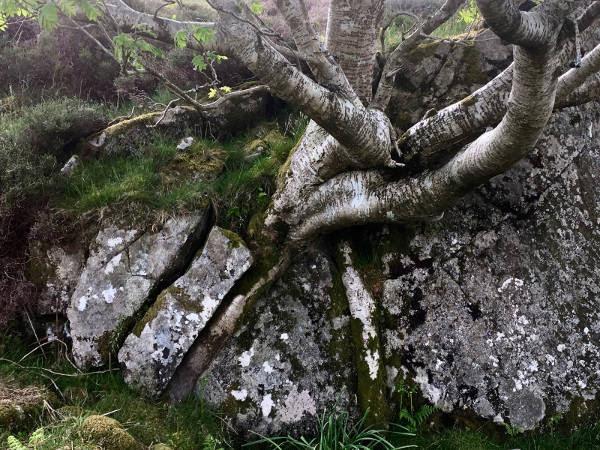rootedintherock.jpg