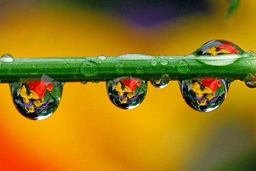 water boquets