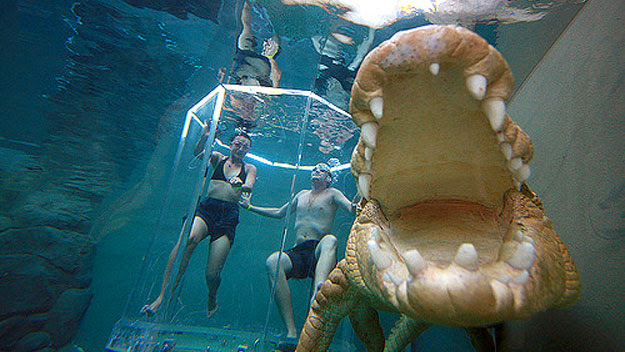Tourists cage diving at Crocosaurus Cove