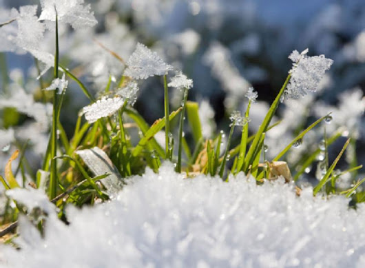 ONE GARDENER TO ANOTHER: Not all grasses should be winterized