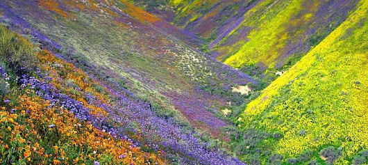 Valley of Flowers | A Nature's Paradise in beautiful Uttarakhand
