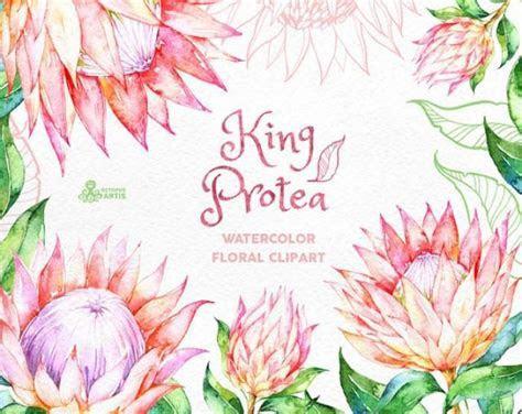 King Protea. Watercolor Floral Clipart, Wedding Invitation