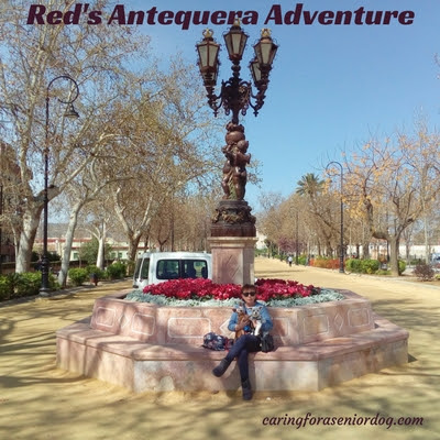 Red's Antequera Adventure - Caring For a Senior Dog