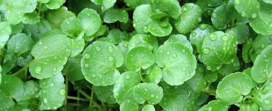 Folate and Vitamin C in watercress prevents stroke and cataract