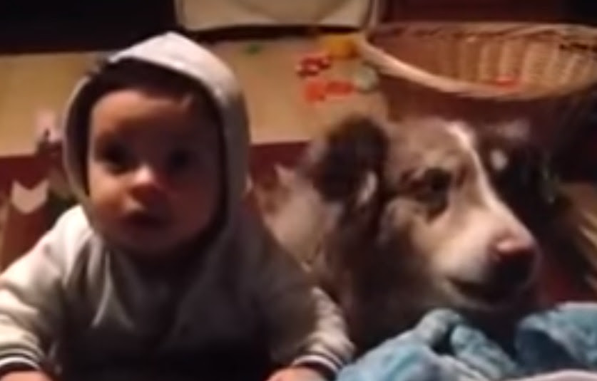 Мережу вразило відео з собакою, яка вміє говорити  «мама»