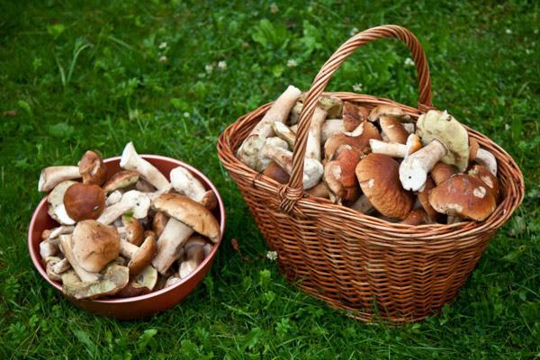 Календарь грибов, грибной календарь, сбор грибов, когда собирать грибы, как собирать грибы, грибной календарь на июнь, грибной календарь на июль, грибной календарь на август, грибной календарь на сентябрь, Календарь грибов на июнь июль август, продолжительность жизни грибов