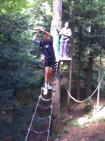 aerial tree service