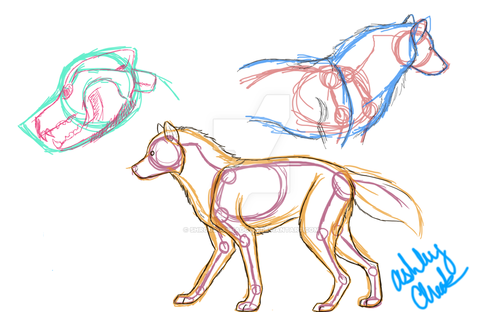 Dog Anatomy Drawing At Getdrawings Com Free For Personal