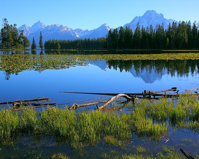 IMG_7943 Heron Pond, Grand Teton National Park