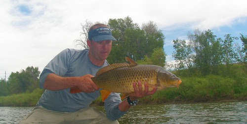 colorado carp on a fly