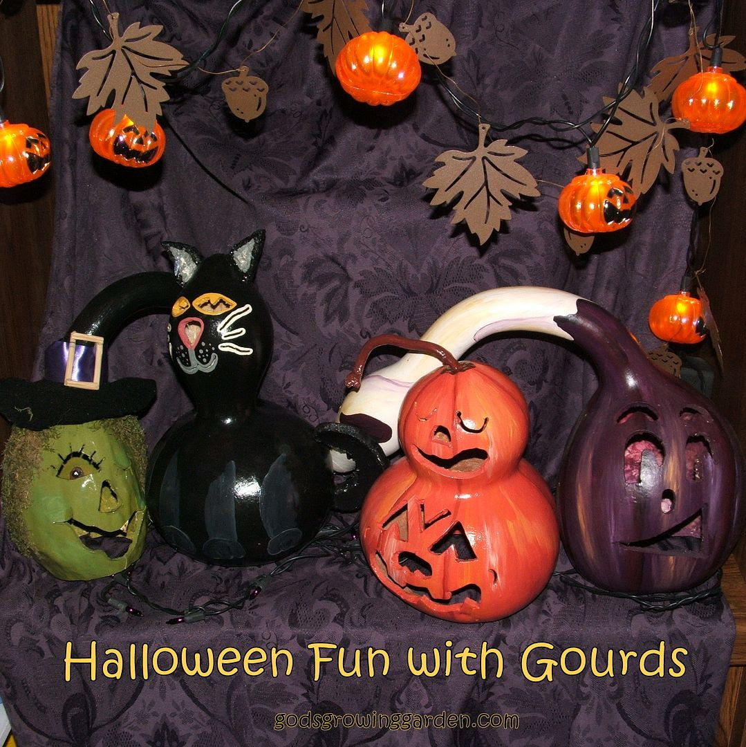 Gourds by Angie Ouellette-Tower for godsgrowinggarden.com photo 006_zpsf5f5d9b3.jpg