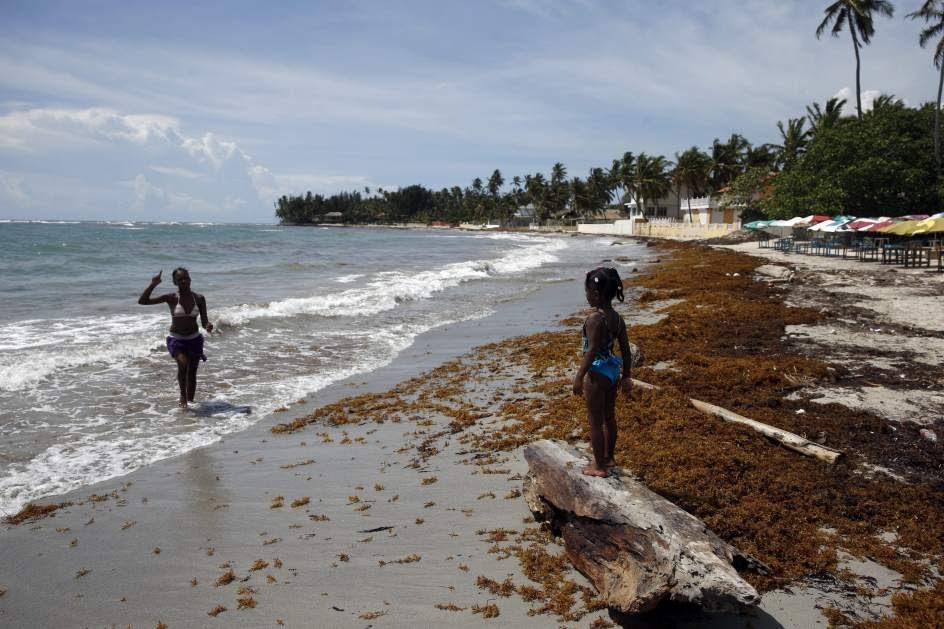 Invasión de algas en República Dominicana
