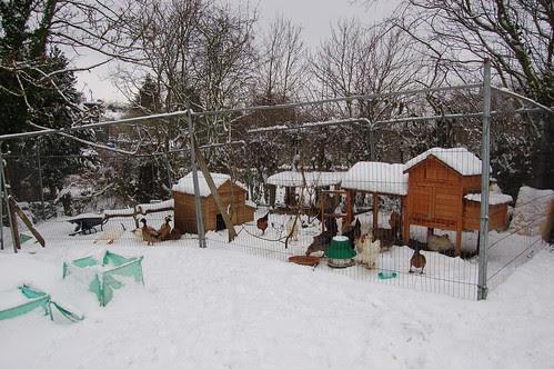 allotment snow Jan 13 1