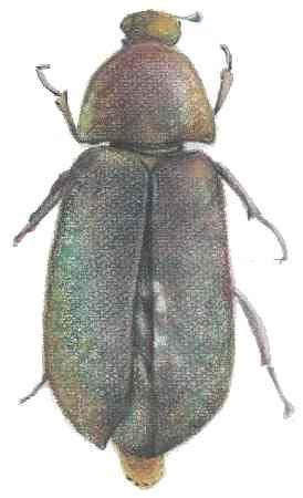 published insect