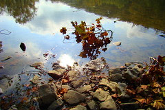 Leaves Little Miami