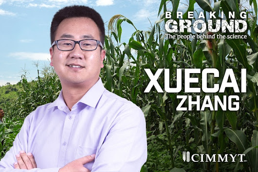 Breaking Ground: Xuecai Zhang prepares future generation of crop breeders | CIMMYT. International Maize and Wheat Improvement Center