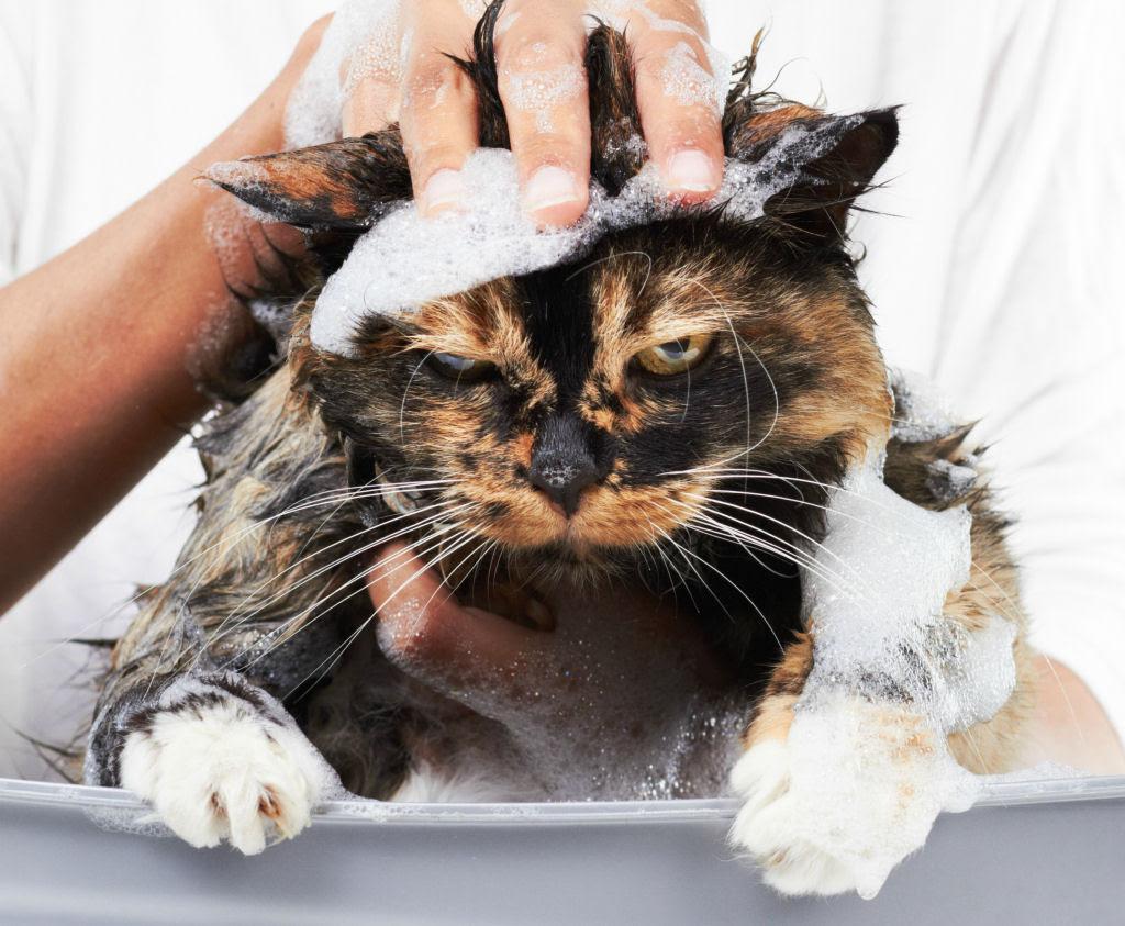 Fotografias engraçadas de gatos tomando banho 03