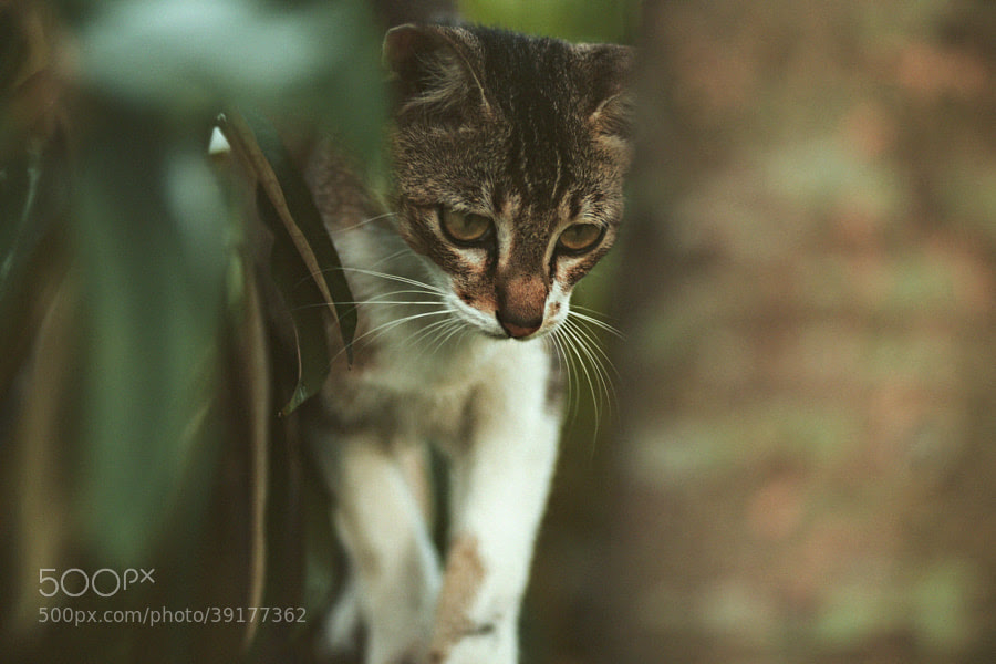 My Kitty by Nazrin Shah (NazrinShah)) on 500px.com