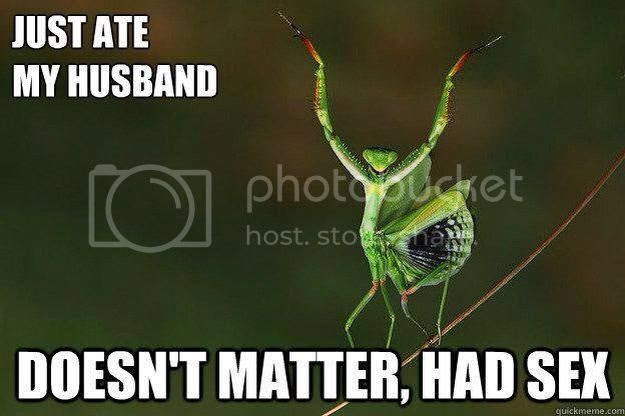 photo PrayingMantis.jpg
