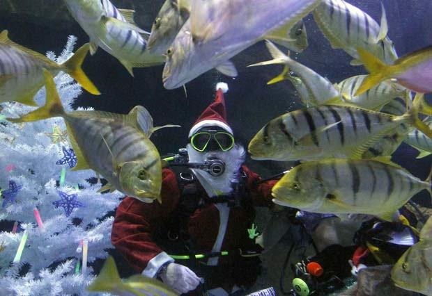 Mergulhador vestido de Papai Noel alimenta peixes dentro de um aquário no Sea Life, em Oberhausen, na Alemanha, no dia 16 de dezembro.